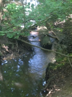 Downstream view of log