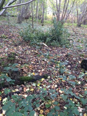 Fallen leaves & small branches in Hillhouse Wood