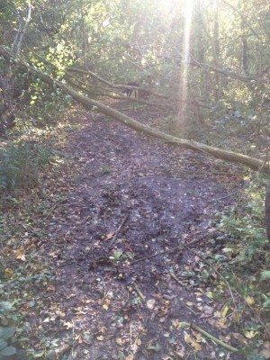 Larger branch over path in Hillhouse Wood