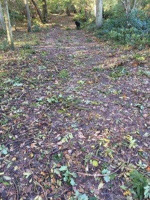 Scattering of twigs in Hillhouse Wood