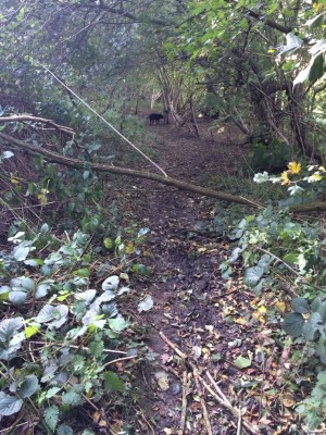 Small branch crossing path in Hillhouse Wood