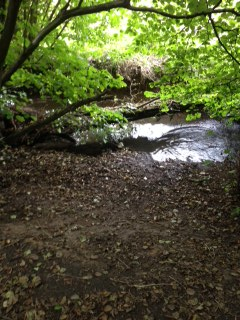 Fallen leaves near streambed at Hillhouse Wood
