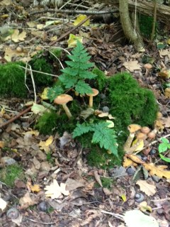 Fungi & moss amongst the leaf mould in Hillhouse Wood