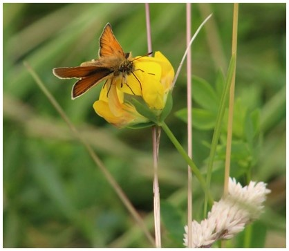 Environment - butterfly on flower