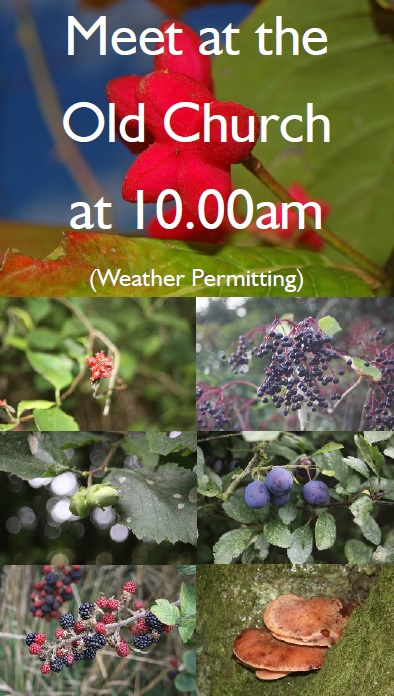 Steve Hallam leads a walk in search of Autumn Fruits