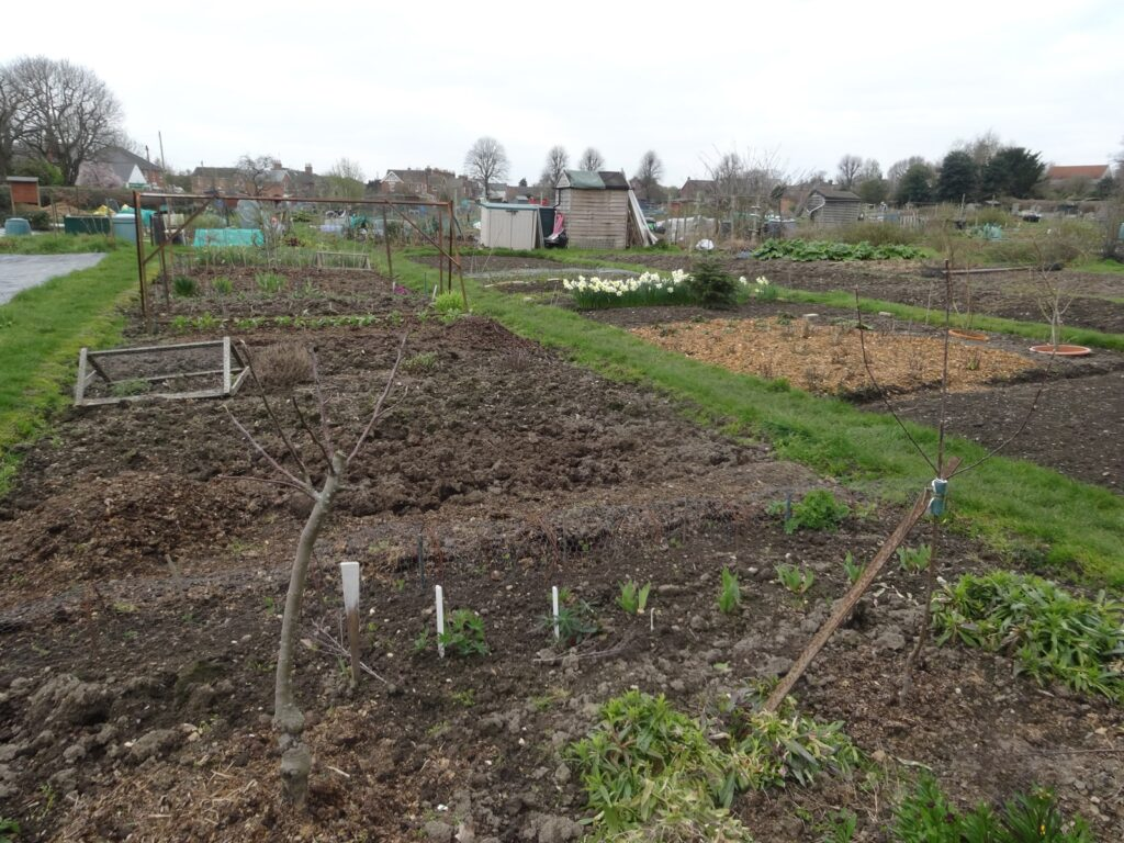 Allotments prepared for planting